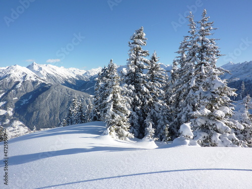 Leinwandbilder,tanne,bäume,wald,winter