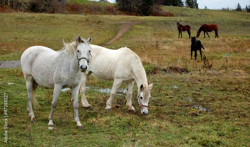 Wild Horse's