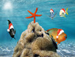 Christmas fish in red Santa Claus hat