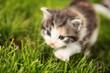 Neugierige kleine Katze