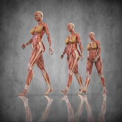 Anatomia Mujer Embarazada