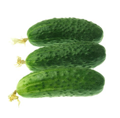 Fresh cucumber with yellow flower
