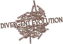 Nuage de Word pour l'évolution divergente