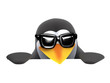 3d Penguin in sunglasses peeps over a blank page