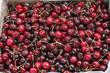 Cherries in a Market Bin