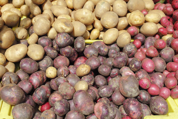 Potato Variety Display