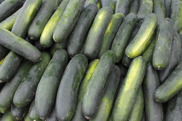 Lots of Cucumbers For Sale