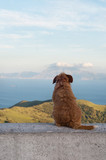 Lonely dog watching on Gibraltar