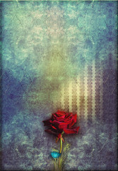 Red rose in to blue deep