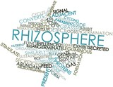 Word cloud for Rhizosphere