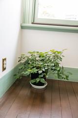 部屋の隅の植栽