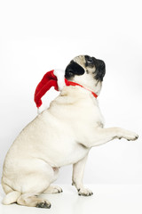 Pug dog wIth a Santa Claus hat