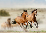 Fototapeta horses
