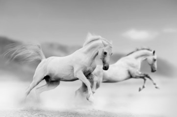 horses in desert © Mari_art