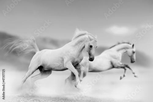 Sticker horses in desert