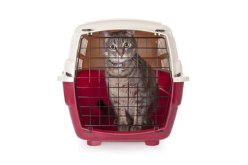 cat closed inside pet carrier isolated on white background.