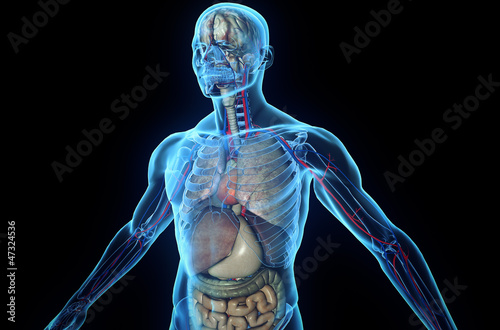 3D human body with internal organs