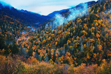 Morning in Smoky Mountains - colorful trees