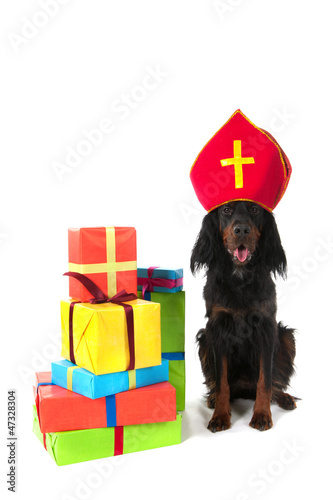 Dutch Sinterklaas dog