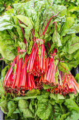 Display of fresh Swiss Chard