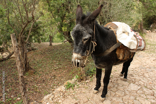 donkey with heavy cargo