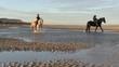 chevaux les pieds dans l'eau