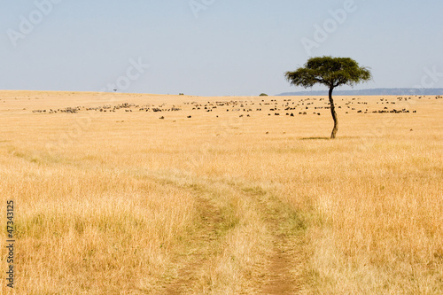 Wide Savannah in Masai Mara National Reserve