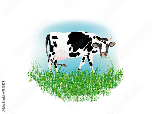Dairy cow over white background.Vector illustration