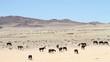 herd landscape
