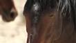 wild horse head