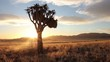 namibia sunset quiver tree