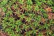 Closeup of aloe vera plant