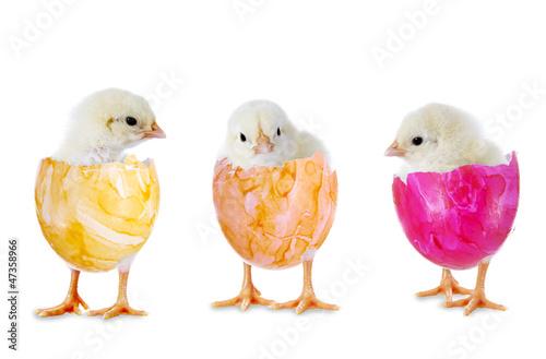 Drei Küken in bunten Eierschalen