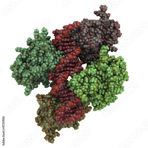 p53 tumor suppressor protein, chemical structure (core domain)