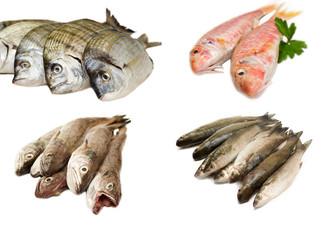 Varietà di pesce fresco