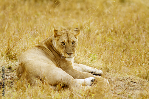 Fototapeten,afrika,afrikanisch,tier,groß