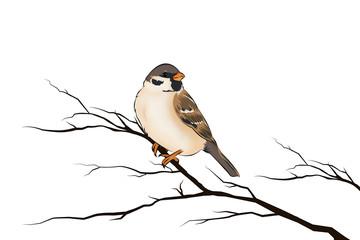 Spatz Sperling Vogel freigestellt