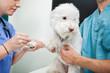 Dog Blood Sample