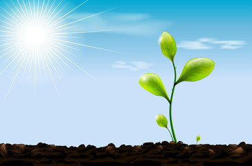 Green sprout , soil and blue sky with sun and clouds