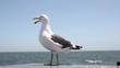 seagull flying away