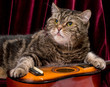 Cat with guitar in studio