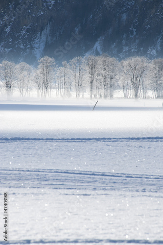 Plakat frosted trees