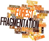 Word cloud for Forest fragmentation