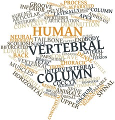 Word cloud for Human vertebral column
