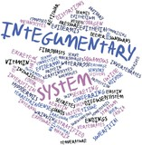 Word cloud for Integumentary system