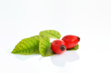 rose hips isolated