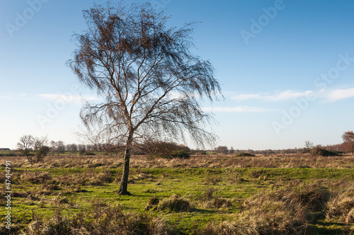 Bare tree in a vast autumnal landscape