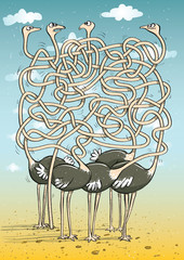 Ostriches Maze Game