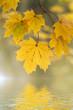 Blätter mit bunter Herbstfärbung am See