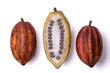canvas print picture - Frische Kakao Früchte mit Bohnen
